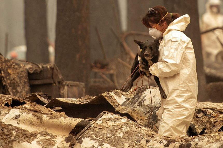 A rescue worker carries Suzie, a cadaver dog, as they search for human remains in Paradise, California on Nov 14, 2018.