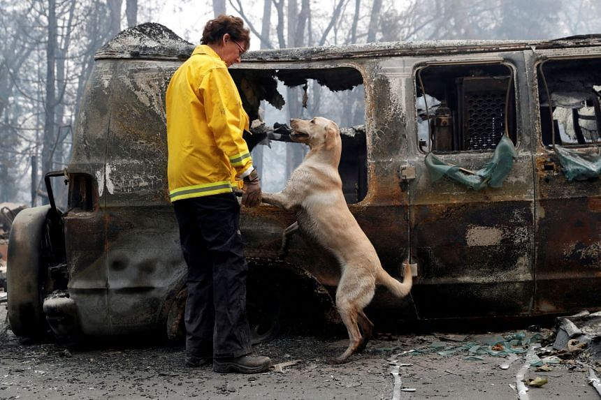 Karen Atkinson, of Marin, searches for human remains with her cadaver dog, Echo, in a van destroyed by the Camp Fire.