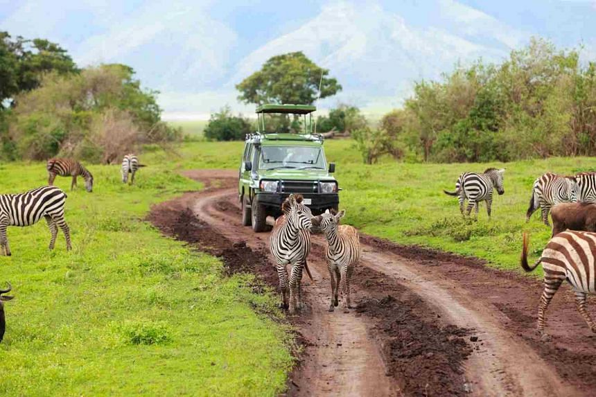 Go on an unforgettable safari in Tanzania, Africa. PHOTO: CHAN BROTHERS TRAVEL
