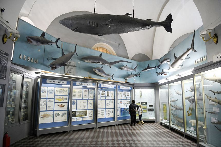 The Zoological Museum in St Petersburg, filled with centuries-old collections, is finding new relevance in the age of genetics.