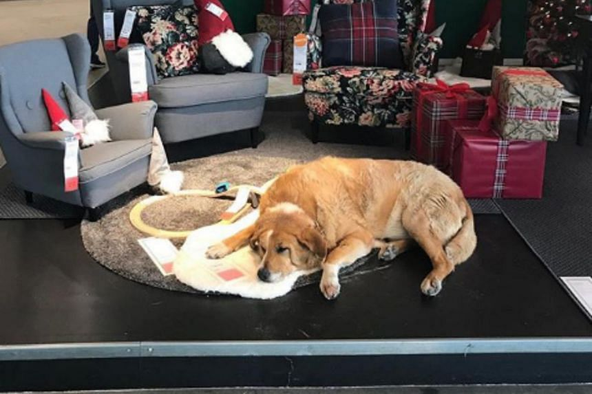Many others have shared photos of the dogs at the store on social media.