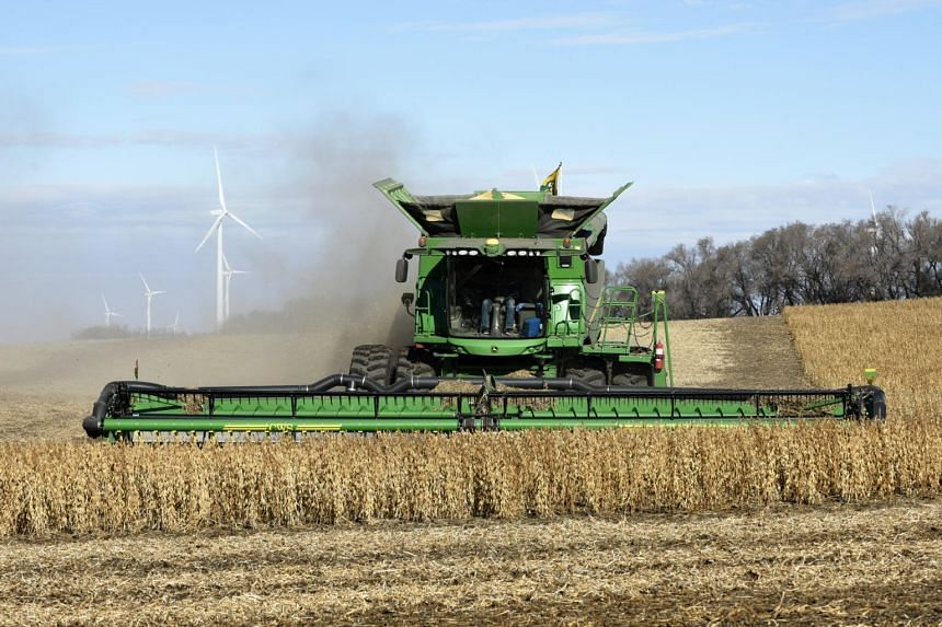 Soybeans being harvested outside Luverne, North Dakota, on Oct 29, 2018. Across the US, grain farmers are leaving crops to rot or piling them on the ground, in hopes of better prices next year.