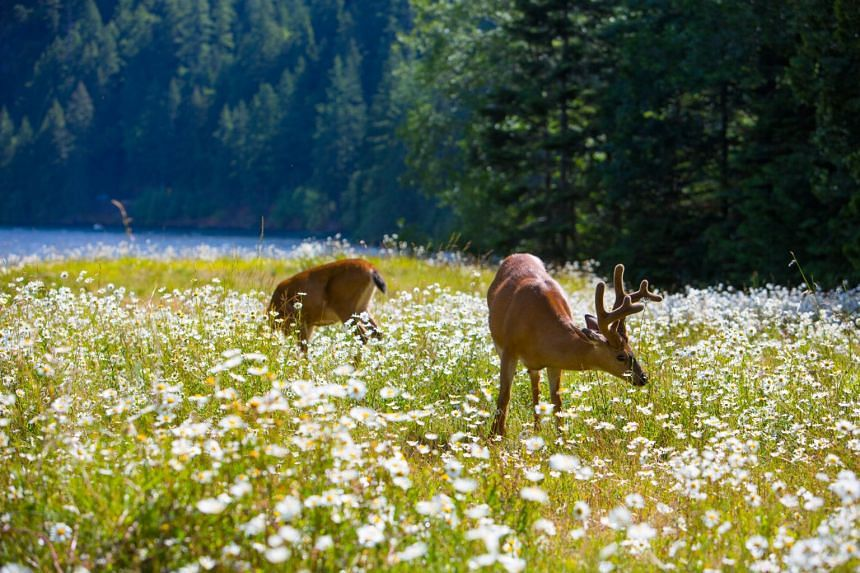 Spring in the United States is typically characterised by milder temperatures, an abundance of greenery, and the emergence of wildlife from hibernation. PHOTO: ISTOCK