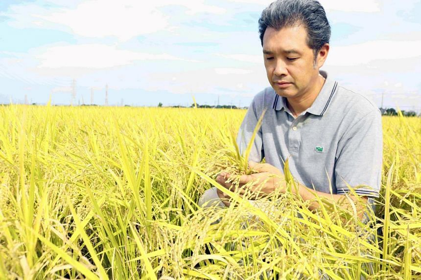 The Sai no Kizuna rice, which was developed to resist high temperatures and typhoons, is one such adaptation to climate-change related phenomena.