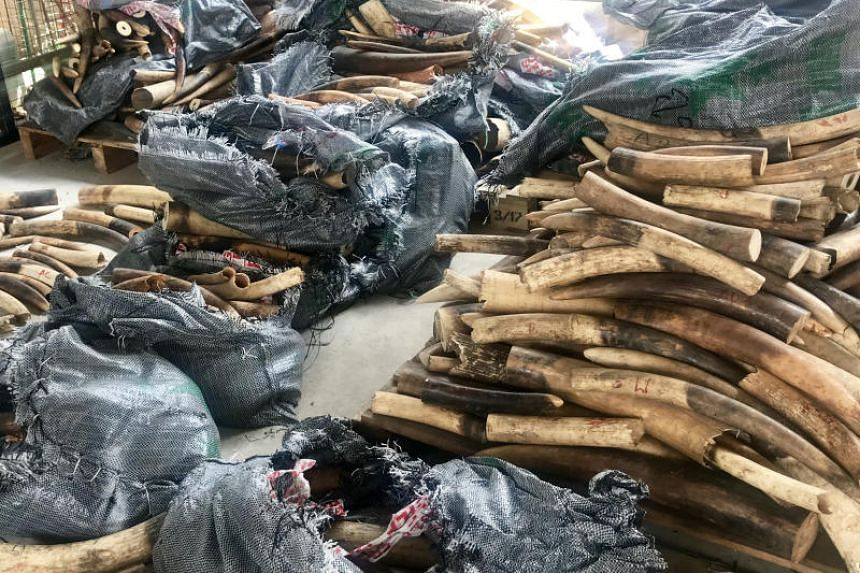Some 3,500kg of illegal ivory was seized in Singapore in March 2018 after it was shipped from Nigeria, en route to Vietnam.