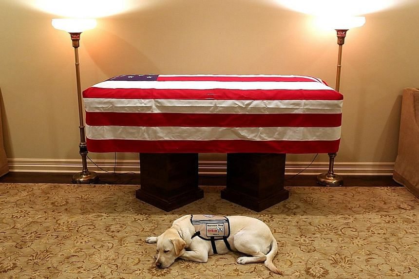 Sully, the service dog of former president George H. W. Bush in his final months, lying in front of his casket at the funeral home in Houston, Texas, yesterday.