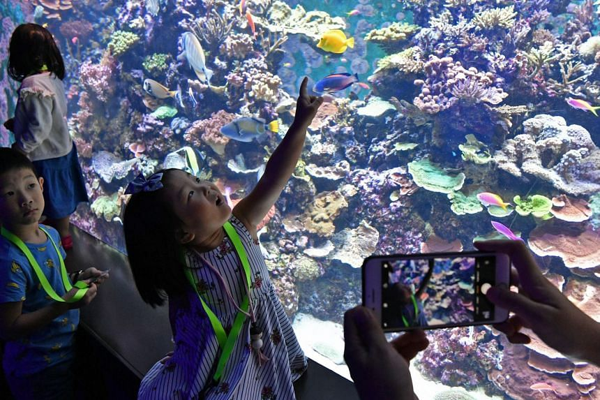 A mother photographs her daughter as she looks at the corals in the Crazy Colourful Corals zone.