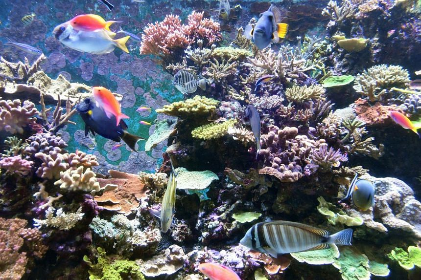 Fishes swim among the corals in the Crazy Colourful Corals zone.