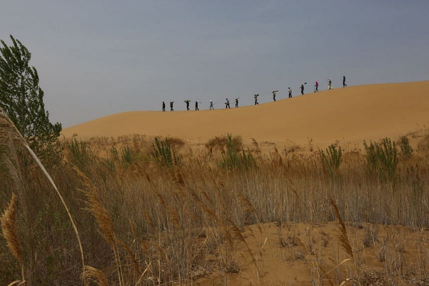 The scheme, which was led by the government and private company Elion Resources Group, saw shrubs and grasses planted on the shifting sand dunes.
