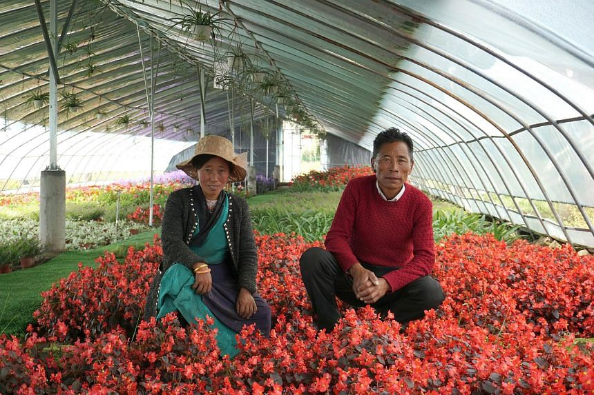 Farmers Lamo Yozhong (left), 33, and Tanzing Laju, 49, in a greenhouse they work at in Qonggyai county of the Shannan prefecture-level city.