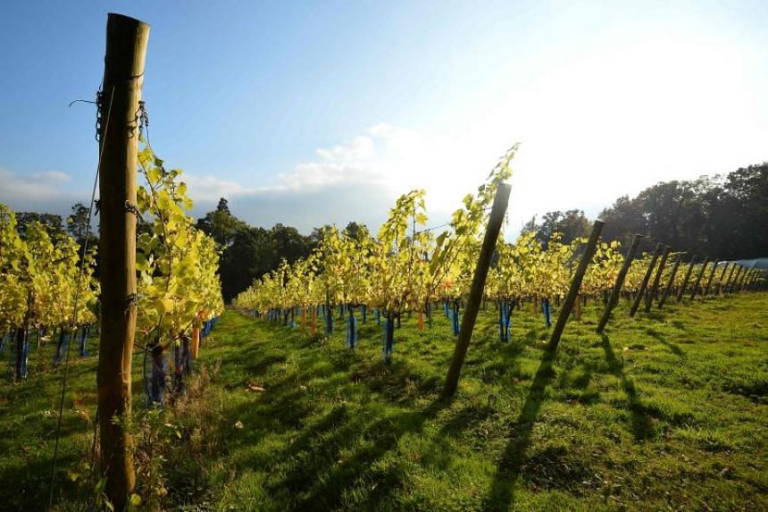 While English vintners have made sparkling wines for decades, the number of hectares given over to their production has soared 150 per cent in the past 10 years, tripling since 2000.