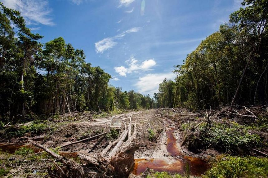Indonesia's government as well its palm oil producers have expressed concern that other countries may follow Norway.