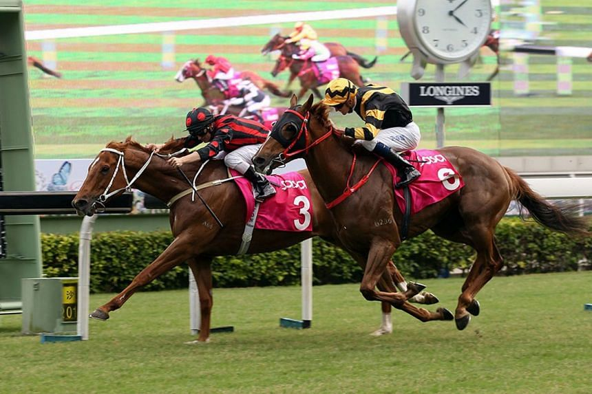 The Tony Cruz-trained Time Warp beating his younger brother Glorious Forever in a thrilling Sa Sa Ladies' Purse on Nov 4. The pair will be battling it out again in tomorrow's Race 8, The Longines Hong Kong Cup.