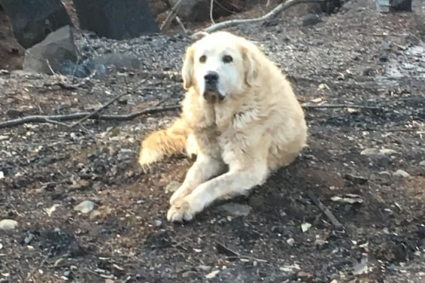 Dog waited weeks for owners at home burned in Camp fire