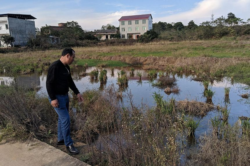 In Shiqiao village, villagers have been living with cadmium-tainted soil for over a decade. Many of them, such as Mr Zhao Guoping, blame the pollution on a nearby chemical-industry park.