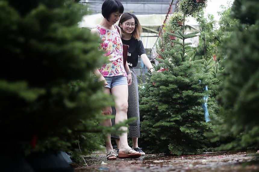 Noble and Nordmann Fir trees for sale at Far East Flora. The firm imports thousands of Christmas trees a year from the US and said that it increased its tree orders this year.