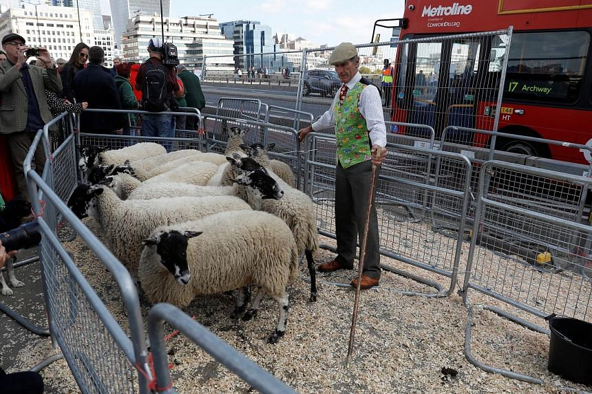 A no-deal Brexit would cause upheaval affecting a vast array of people, including passengers at Heathrow Airport, mobile phone users, people who require medication and possibly even sheep breeders (above)