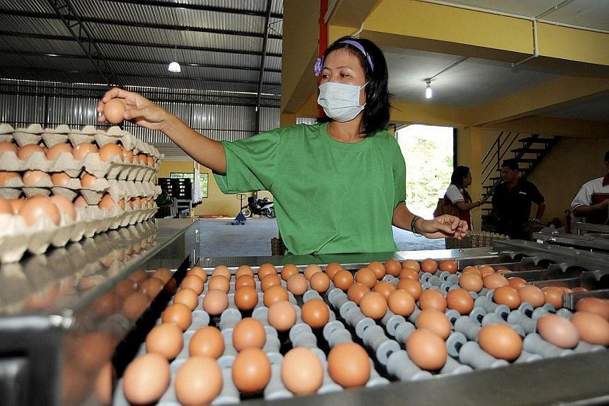 A worker at a chicken egg processing factory in Kuching. Malaysian Minister Saifuddin Nasution Ismail said on Monday that the country was looking into limiting, or stopping, the export of eggs to ensure sufficient supply for the domestic market.