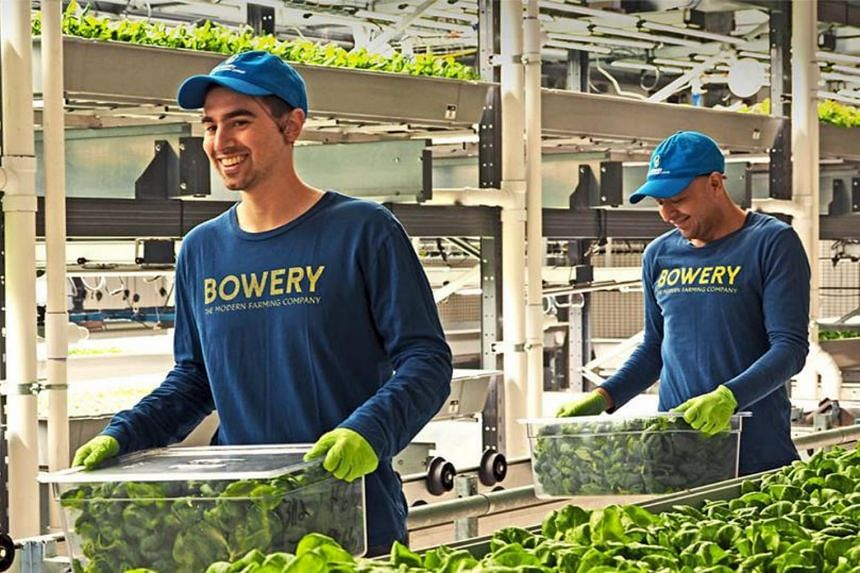 Bowery Farming Inc plans to announce on Wednesday that it raised US$90 million from investors including GV, formerly Google Ventures, Temasek Holdings, and Uber chief executive officer Dara Khosrowshahi.