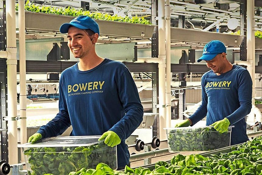 Bowery Farming operates two indoor farms in Kearny, New Jersey. The facilities send greens like kale and bok choy to Whole Foods and salad chain Sweetgreen. The start-up's CEO, Mr Irving Fain, said the fresh funding will be used to open new farms in
