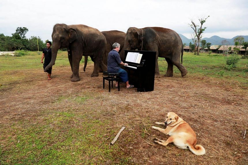 The animals at Elephants World get good food and treatment for their physical ailments, but the music is an extra, special treat they appear to love.