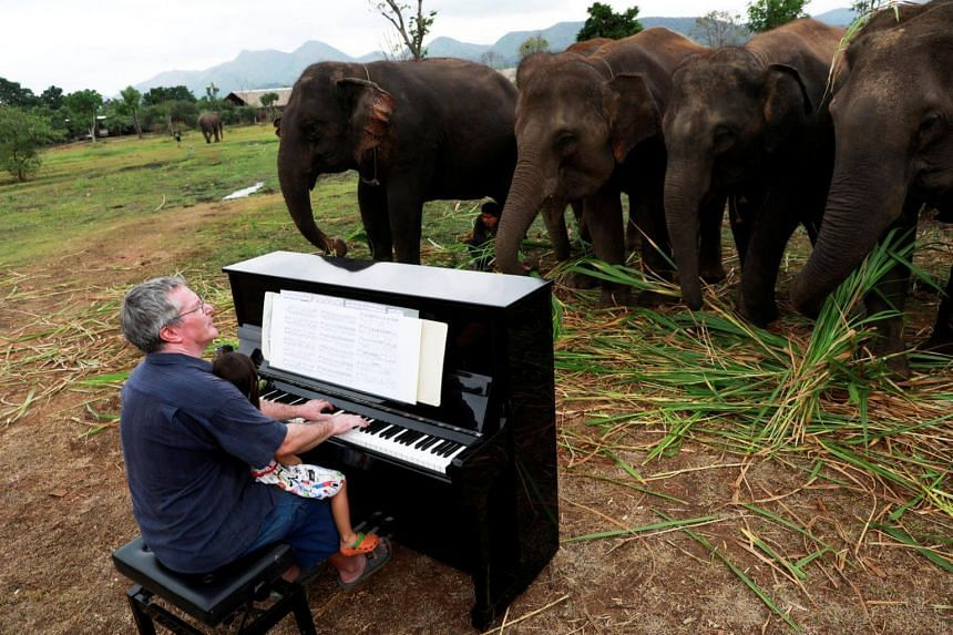 British volunteer Paul Barton playing the piano for sick, abused, retired and rescued elephants in a sanctuary along the Thailand-Myanmar border in Kanchanaburi, Thailand, on Dec 9, 2018.