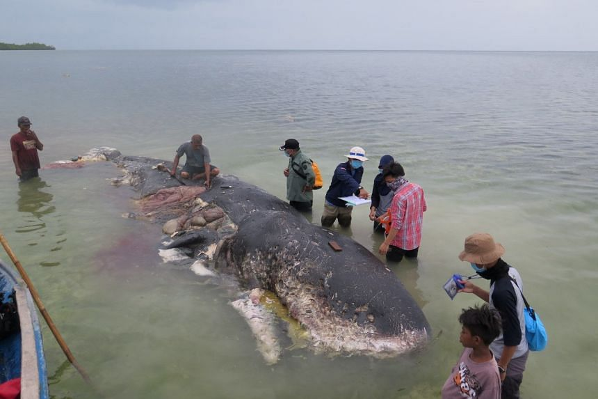 A stranded whale with plastic in his belly is seen in Wakatobi, south-east Sulawesi, Indonesia, on Nov 19, 2018.
