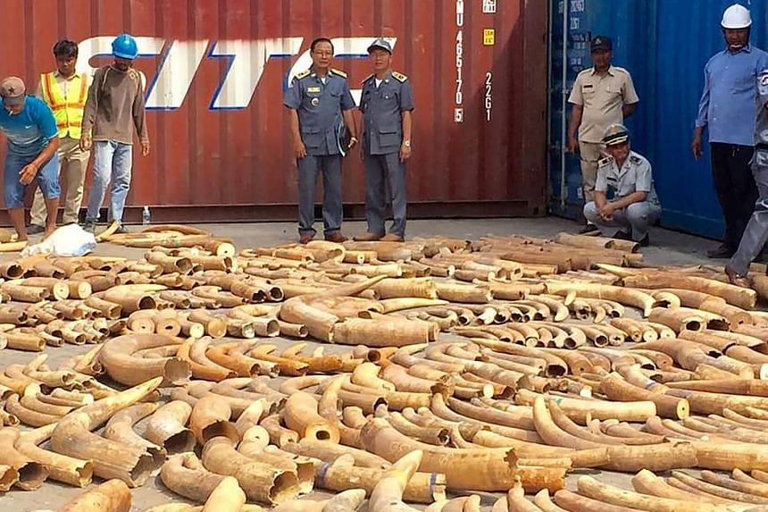 Pictures of the massive haul showed long rows of confiscated tusks spread out on the ground at the port.