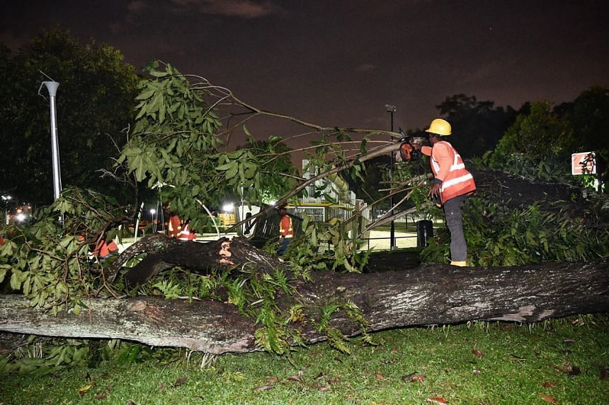 The Singapore Civil Defence Force said it responded to the fallen tree incident in Beaulieu Road at 5.55pm.