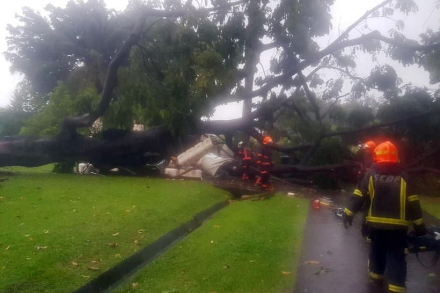 The tree fell and damaged a shelter in Sembawang Park.