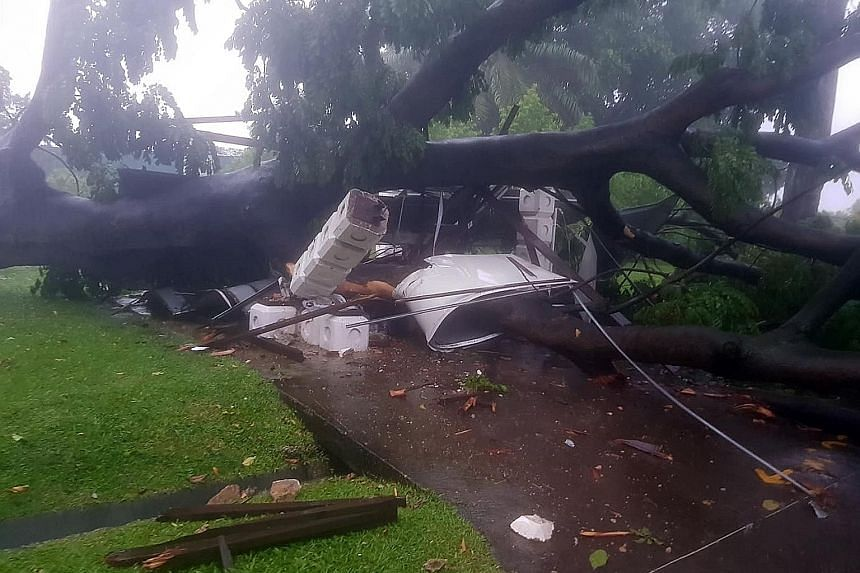 An unaffected shelter at Sembawang Park and the damaged shelter (above) that was hit by the falling tree. The uprooted tree was 21m tall, with a 3.1m girth.