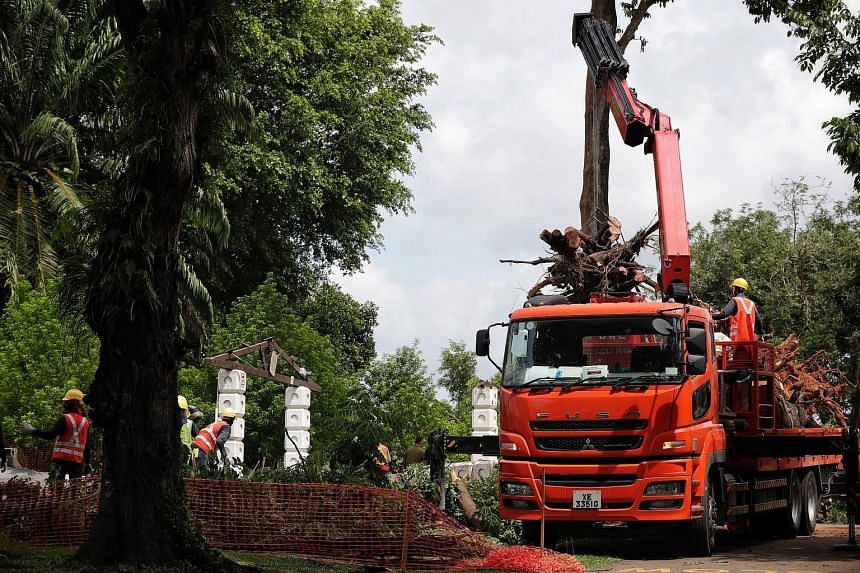 Workers clearing the uprooted tree and debris at the site of the damaged shelter at Sembawang Park yesterday. The affected area has been cordoned off to facilitate tree clearance works, but the rest of the park remains open to visitors.