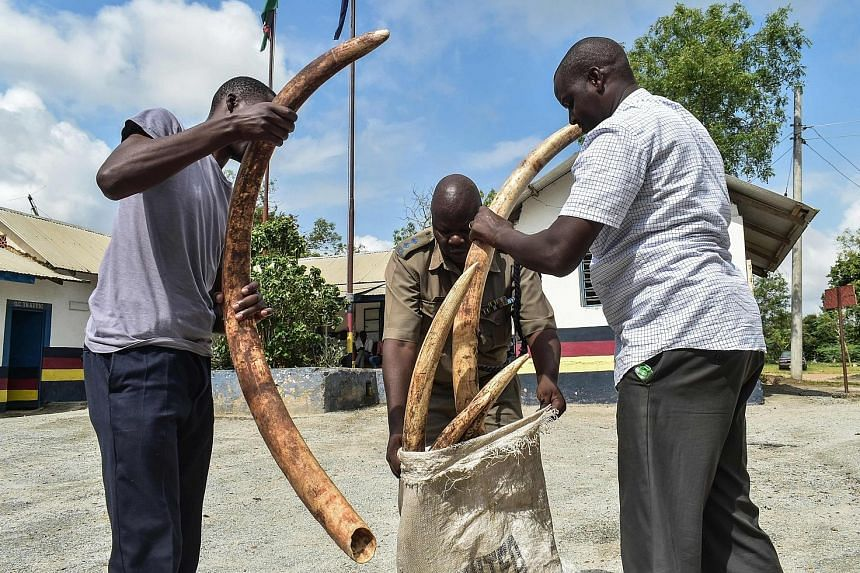 Kenyan police officers on Dec 5 with seized ivory weighing 55kg and with an estimated street value of 5.5 million Kenyan shillings (S$74,000).
