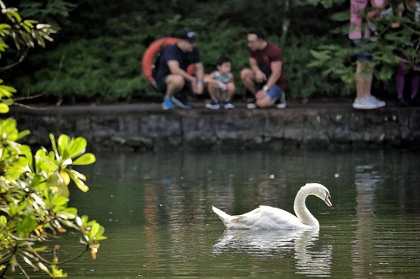 From left: Shawn, Noel and James (not their real names) visiting the Botanic Gardens' Swan Lake yesterday. Last Monday, the High Court allowed James to adopt Noel, whom he fathered in the United States through a surrogate mother.