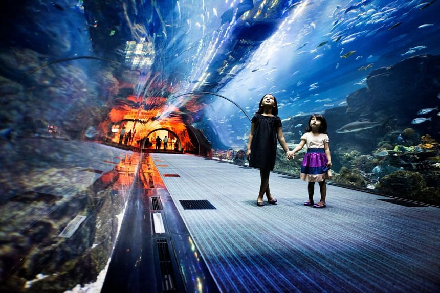 Be awed by the wide range of aquatic life at Dubai Aquarium and Underwater Zoo. PHOTO: TOURISM DUBAI