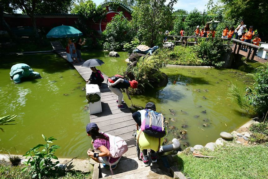 The museum has around 500 turtles, tortoises and terrapins. The new location in Yishun will be about 10 per cent bigger than the Chinese Garden site, but the renovation cost is about $600,000 and the owner Connie Tan is around $200,000 short. She is