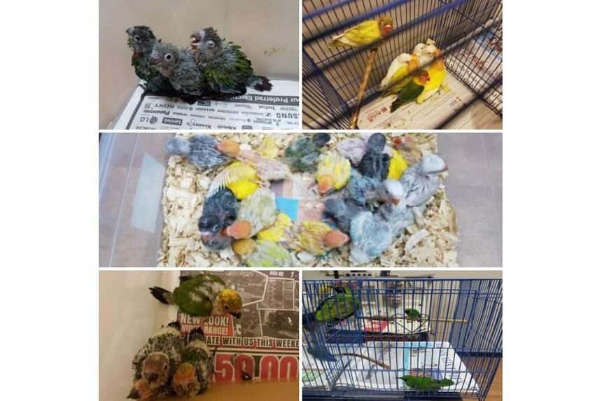 During the checks, ICA officers noticed an unusual noise from the rear passenger seat, where they found two boxes containing 40 live birds.