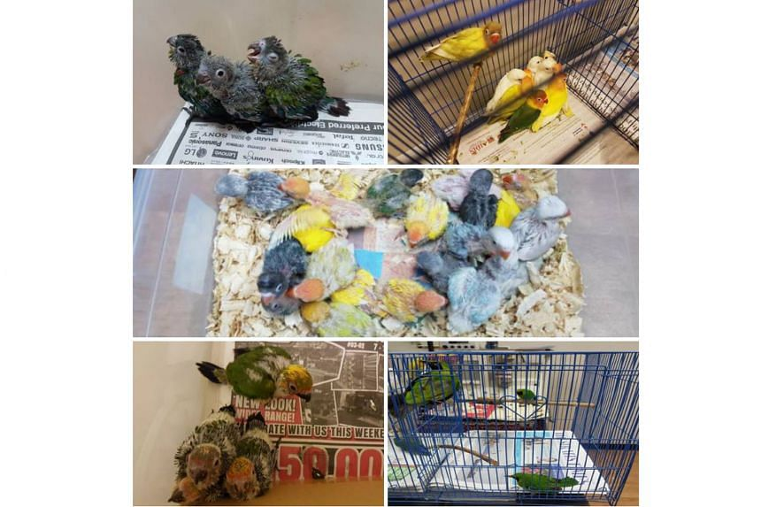 During checks on a Singapore-registered car driven by a 49-year-old man, ICA officers found two boxes containing 40 live birds. The case has been referred to the AVA for further investigations.