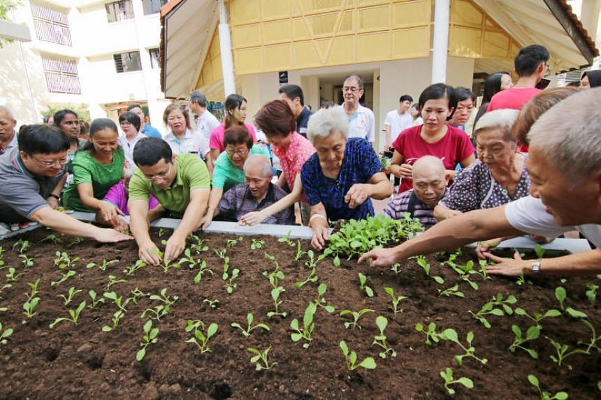 Residents of South West District planting plants in a community garden with guest-of-honour Desmond Lee (third from left) and District Mayor Low Yen Ling (centre, in pink) on Dec 30, 2018.