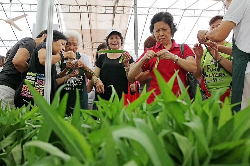 Volunteers teaching residents some basics on gardening at a community garden in Jurong West.