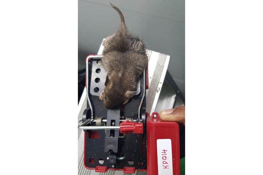 Killem Pest's electronic rodent monitoring trap offers rodent surveillance and immediate notification when a rodent is caught.