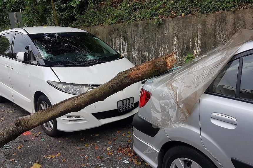 In 2013, businessman Victor Yew (left) managed to recover 75 per cent of his repair costs of about $2,800 from NParks after a tree branch fell and hit his Volkswagen Golf R's windscreen and bonnet in front of TripleOne Somerset. He says he was compen