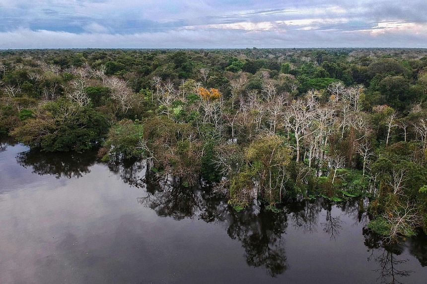 A view of the Mamiraua Sustainable Development Reserve in Brazil's Amazonas state. The beauty of bioacoustic data, the writer says, is that researchers can run algorithms to map soundscapes, allowing us to better understand ecological communities and