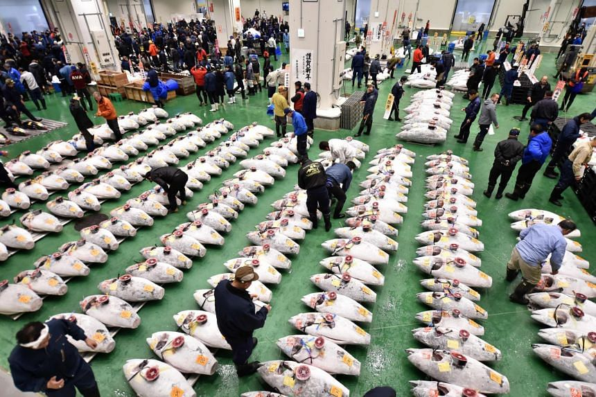 Wholesalers checking frozen tuna lined up in rows ahead of the new year's first auction at the Toyosu Market in Tokyo, on Jan 5, 2019.