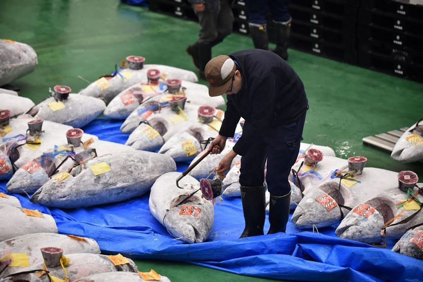 A wholesaler checking frozen tuna ahead of the new year's first auction at the Toyosu Market in Tokyo, on Jan 5, 2019.