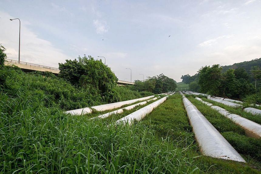 Water pipes beside the Bukit Timah Expressway. Under the 1962 Water Agreement, Singapore is required to supply Johor with 5 mgd of treated water. In practice, the Republic has been supplying 16 mgd to Johor at its request.