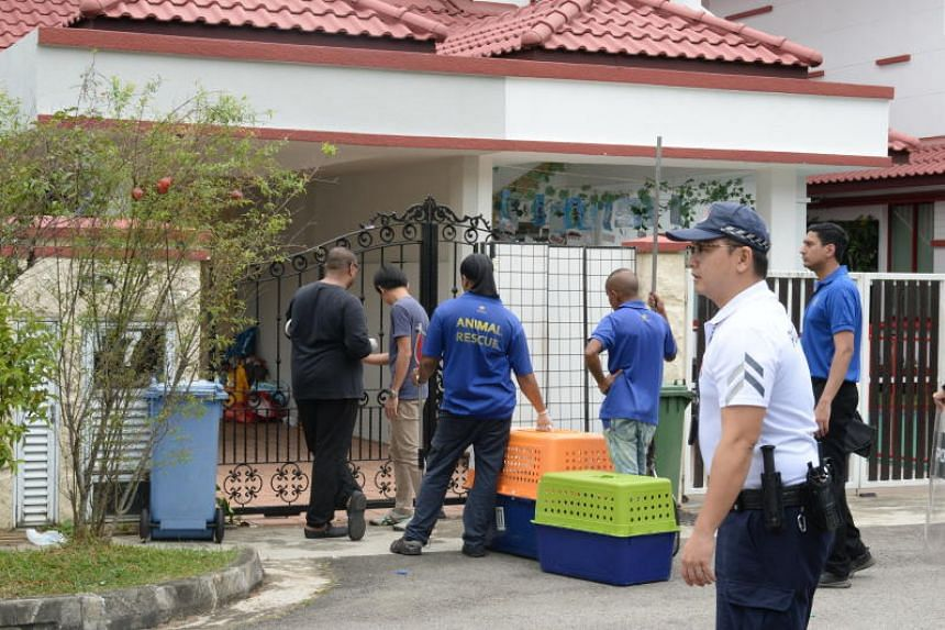 The Agri-Food and Veterinary Authority is authorised to make arrests for offences that fall under nine Acts and their subsidiary legislation. PHOTO: LIANHE WANBAO