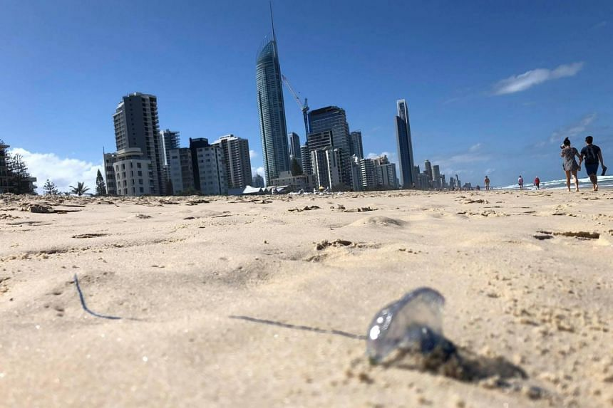 A photo by the Queensland Ambulance Service shows a bluebottle jellyfish washed-up on Surfer's Paradise beach in Queensland, Australia, on Jan 6, 2019.
