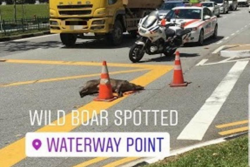 Screengrab from social media showing the accident involving the wild boar that took place outside the Waterway Point shopping mall.