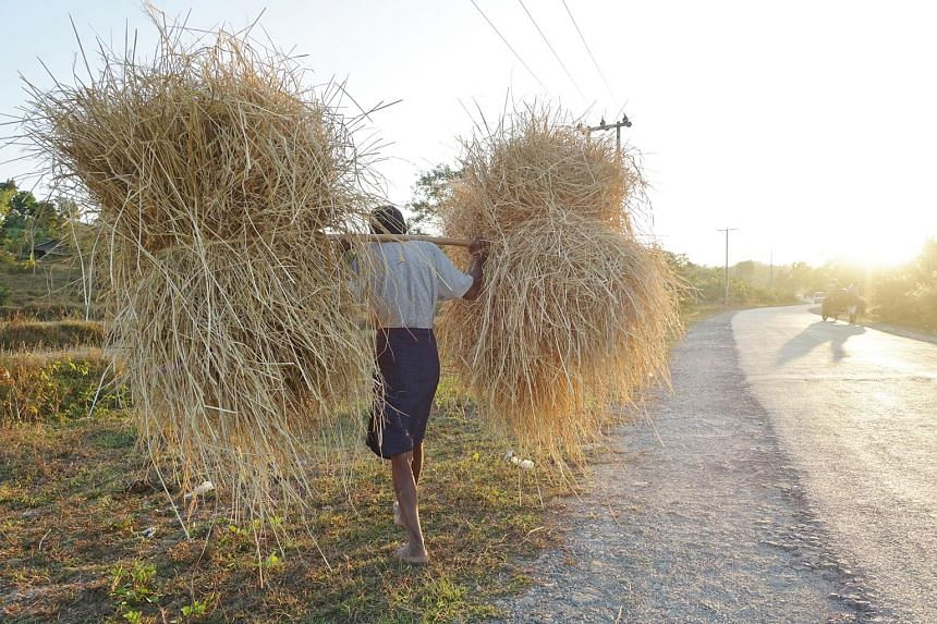 A farmer carrying hay in the setting sun. Fences popping up on surrounding plots remind them of China-driven changes to come and for some locals the Chinese money offers much needed development to Myanmar's second-poorest state. On Maday Island, a st